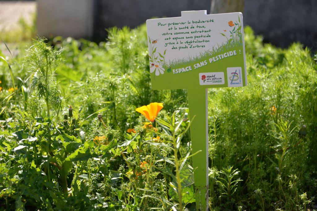 Zero phyto espaces verts prairie fleurie Brignais